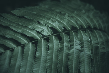 Close up of Fern in Jungle, with Dark Shadow in Background