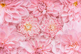 Fototapety Pastel pink flowers background, top view, Layout  or greeting card for Mothers day, wedding or happy event