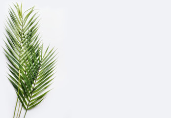 Green palm leaves on white table background, top view, place for text, mock up