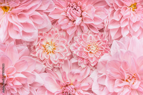 Pastel pink flowers background, top view, Layout  or greeting card for Mothers day, wedding or happy event - 179501633
