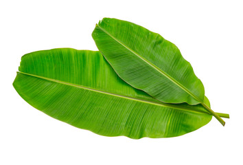 Banana leaf Wet isolated on white background. File contains a clipping path.