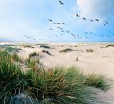Langeoog, Fliegen, Freiheit, Urlaub, Entspannung: Wildgänse an einer Ostseeküste :) - 179516073