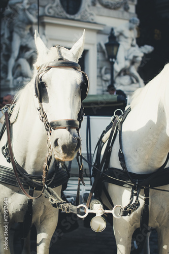 Foto op Canvas Wenen Vienna, Austria, traditional two-horse carriage