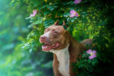 Dog portrait in flowers of wild rose - 179528077