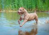 Dog plays in the river - 179528297