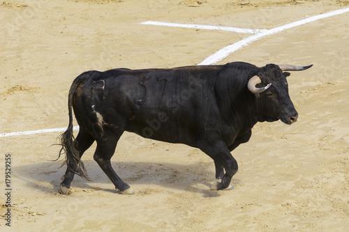 Staande foto Stierenvechten Toro bravo español