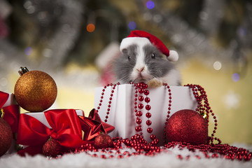 Funny rabbit in Santa hat with Christmas box