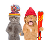 Kitten and Puppy in warm hat holding skiing. isolated on white background