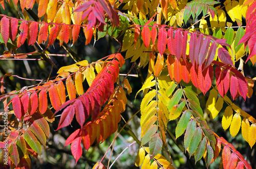 Fotobehang Tuin Herbstfarben