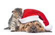 Sleeping bloodhound puppy in red christmas hat and kitten. isolated on white background. Focus on cat