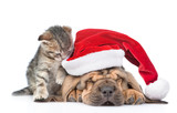Sleeping Bloodhound Puppy In Red Christmas Hat And Kitten    Focus On Cat Wall Sticker