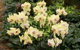 Fototapety Gelbe Orchideen