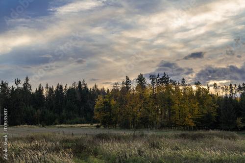 Fotobehang Lente Autumn trees near the dark forest in sunset