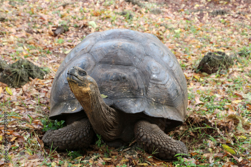 Fotobehang Schildpad Galapagos-Riesenschildkröte