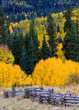 The Scenic Beauty of the Colorado Rocky Mountains - Kebler Pass in Autumn