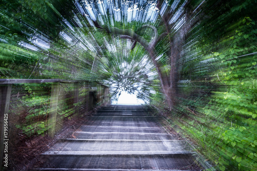 Fototapeta  Forest tunnel up stairway through trees