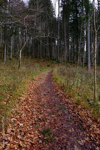 Foto op Plexiglas Bruin The path