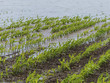 Leinwanddruck Bild - flood 2013