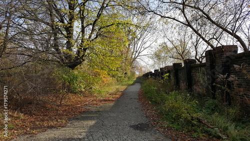 Foto op Plexiglas Weg in bos droga drzewa mur zielen jesień