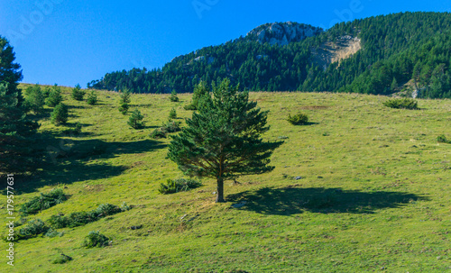 Foto op Plexiglas Pistache paisaje verde