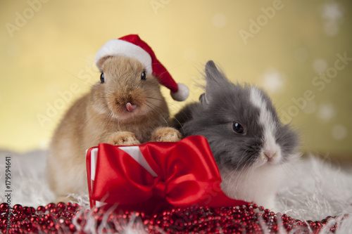 Poster Rabbit in red santa hats, Holiday Christmas background