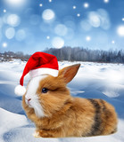 winter landscape with a cute  little rabbit and snow - 179595824