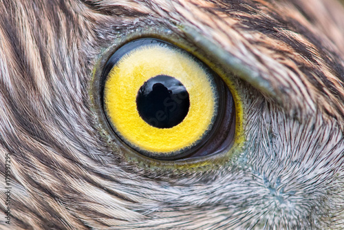 Fotobehang Eagle eagle eye close-up, macro photo, eye of the Goshawk