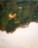 Eichenblatt im Wasser gespiegelt - 179608850