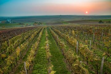 Kolorowa i niepowtarzalna winnica na Morawach