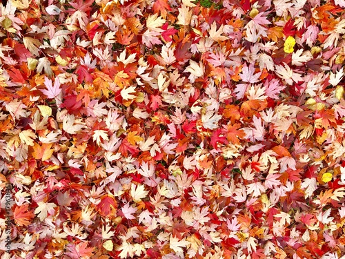 Autumn leaves cover the ground