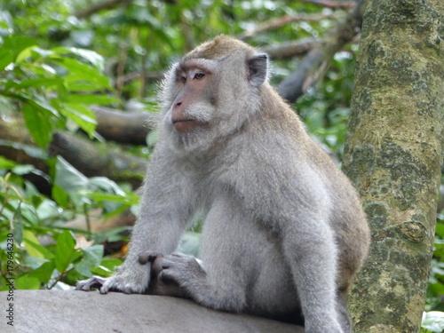 Aluminium Aap monkey forest Ubud