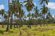Quadro Scenery of rural Tongatapu island, Tonga