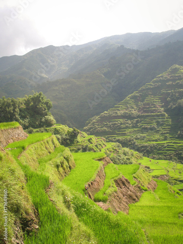 Poster Lime groen Landscape of green rice paddies in the north of Luzon Island near the town of Banaue, Philippines, Unesco World heritage Site