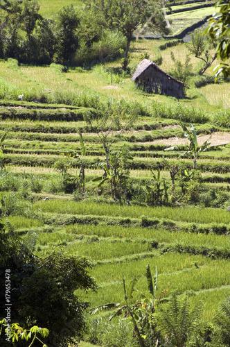Papiers peints Bali Green paddy field in Bali