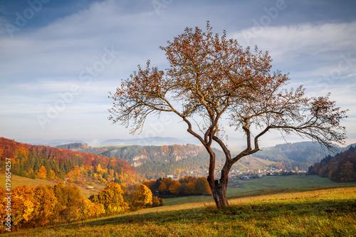 Papiers peints Automne Colorful landscape in autumn, Slovakia, Europe.