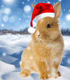 little rabbit and a winter landscape with snow - 179661031