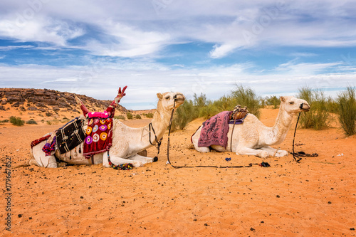 Fotobehang Kameel les aventuriers du désert