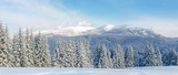 Panorama of winter mountain range in the Carpathians - 179671676