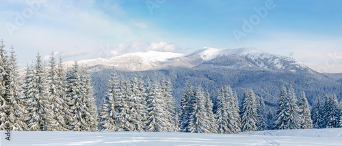 Panorama of winter mountain range in the Carpathians