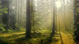 jesień w lesie - 179672201