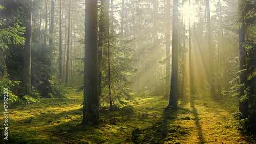 jesień w lesie