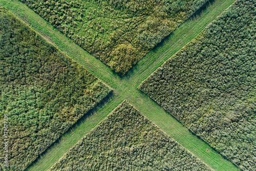 Foto op Plexiglas Natuur Top view of reed field with paths