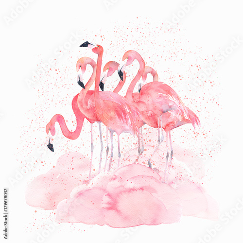 Watercolor flamingos with splash. Hand drawn isolated illustration - 179679042