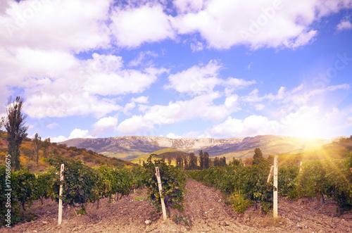 Fotobehang Wijngaard Green vineyards in Crimea Ukraine with mountains at background