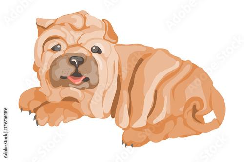 Plexiglas Cute cartoon sharpei (shar pei) dog, isolated on white background