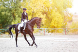Young rider woman on bay horse performing advanced test on dressage competition. Equestrian event background with copy space - 179742284