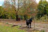 Cavalli al prato - 179746242