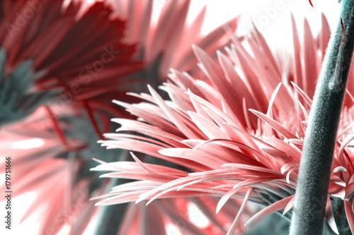 Fotobehang Gerbera Blumengesteck Makro