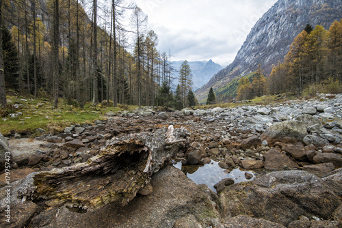 Foto op Plexiglas Natuur pond in the mountains with a trunk in the foreground