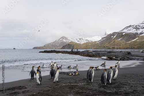Foto op Canvas Antarctica South Georgia landscape with king penguins